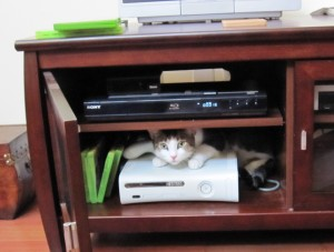 Merlin enjoys the XBox360 in his own way