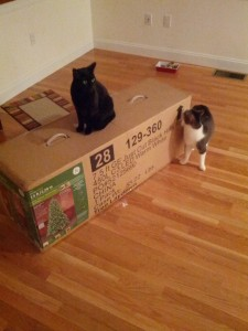 Cats investigating the Christmas tree box