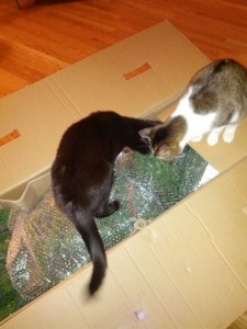 Two cats sniffing the artificial Christmas tree while it's still inside the box