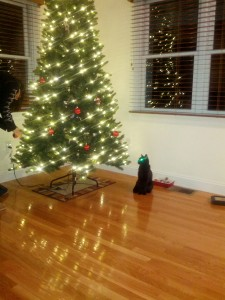 Morgana watches, with her usual composure and restraint, while Mrs. Gronosky covers the tree in shiny, dangly objects indistinguishable from cat toys.